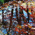 Autumn Reflections by Nancy Mueller