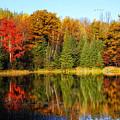 Autumn Reflections by Peg Runyan