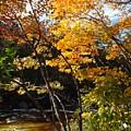 Autumn River by Barbara Von Pagel