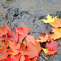 Autumn River Landscape Red Fall Leaves by Baslee Troutman