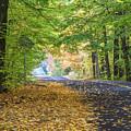 Autumn Road 2 by Robert Alsop
