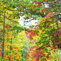 Autumn Road - Digital Paint by Debbie Portwood