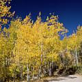 Autumn Road by Jim West