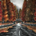 Autumn Road by Paul Dutka