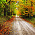Autumn Road by Peg Runyan