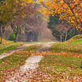 Autumn Road by Stephen Sisk