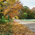 Autumn Road With Fence  by John McGraw