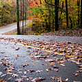 Autumn Roads by Parker Cunningham