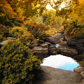 Autumn Rock Garden by Jessica Jenney