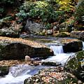Autumn Rushing Mountain Stream by Thomas R Fletcher
