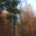Autumn Scene 10-23-09 by David Lane
