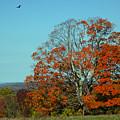 Autumn Scene 2 by June Marie Sobrito