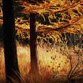 Autumn Scene In A Dark Forest by Nick Biemans