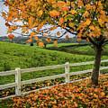 Autumn Scene In The Irish Countryside by James Truett