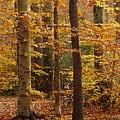 Autumn Scenery by Hideaki Sakurai