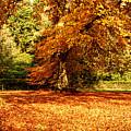 Autumn Scenery by Krzysztof Dac