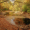 Autumn Serenity by Debbie Oppermann