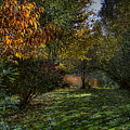 Autumn Shadows by David Patterson