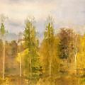 Autumn Shear Poplars by Ronald Bolokofsky