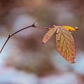 Autumn Simplicity by Chris Bordeleau