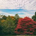 Autumn Skies by Jessica Jenney