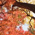 Autumn Sky by Dan Leffel