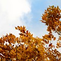 Autumn Sky by Henrik Lehnerer