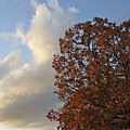 Autumn Sky by Jeannie Burleson