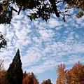 Autumn Sky by Tammie J Jordan