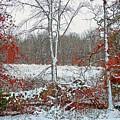Autumn Snow by Kevin Jackson