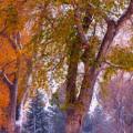 Autumn Snow Park Bench Peace by James BO Insogna