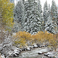 Autumn Snowfall On Castle Creek by Jemmy Archer