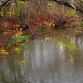 Autumn Solitude by Kay Novy