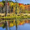 Autumn Splendor - Bolton Flats by Luke Moore