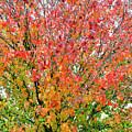 Autumn Splendor by Brian Tada