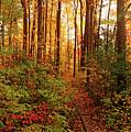 Autumn Splendor by Debbie Oppermann