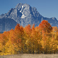 Autumn Splendor In Grand Teton by Sandra Bronstein