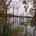 Autumn Splendor by Jackie McNeill