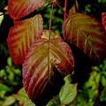 Autumn Splendor by Kathleen Sartoris