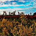 Autumn Splendor by Marty Kugler