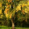 Autumn Splendor by Patricia Strand