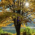 Autumn Splendour by Michele Broadfoot