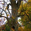 Autumn Spook by Karen Wagner