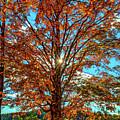 Autumn Star- Paint by Steve Harrington