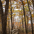 Autumn Steps John Latsch State Park by Kari Yearous