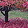 Autumn  by Stewart Helberg