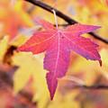 Autumn Still by Karol Livote