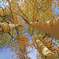 Autumn Straight Up by Donna Kennedy