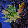 Autumn Stream 2 by Noah Cole
