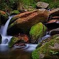 Autumn Stream by Dennis Nelson